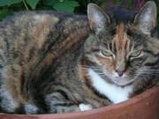 Bromley Cat Sitting